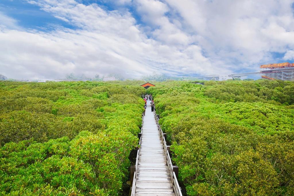 【新竹新豐】新豐紅樹林綠色步道:兼具休閒與觀光的生態保護區,走在被大自然包圍的綠色小隧道 @飛天璇的口袋