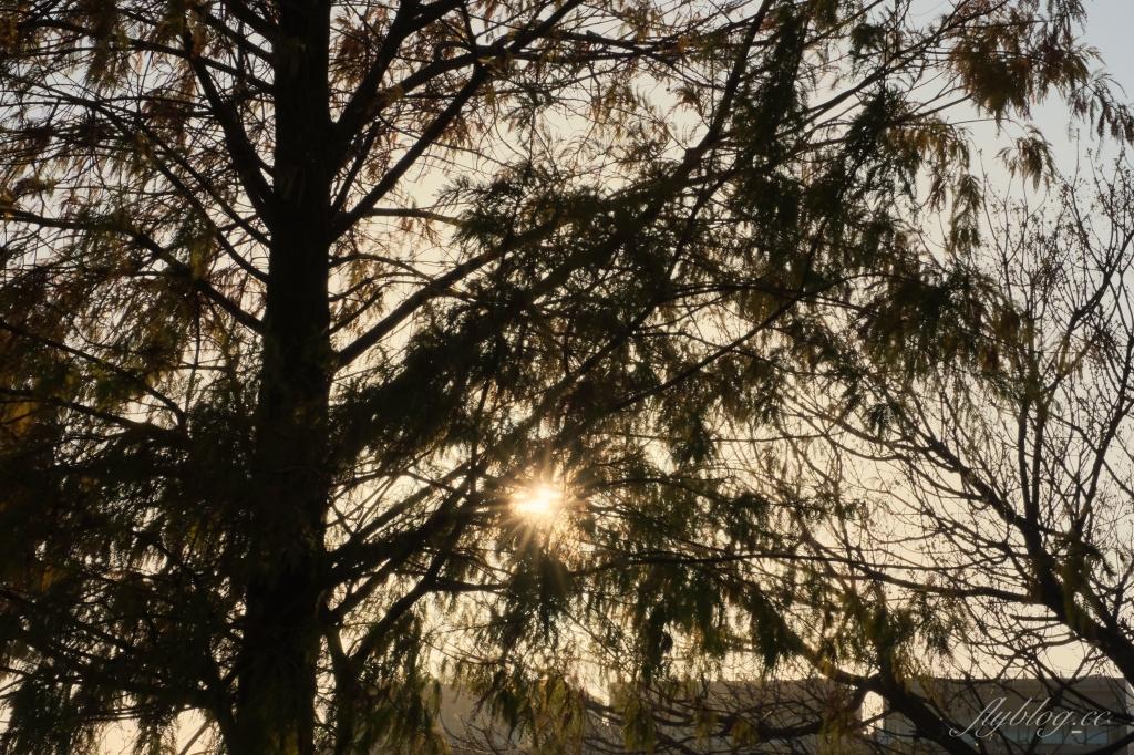 南興公園:米奇樹IG打卡新亮點!北屯萬坪公園~溜滑梯、落羽松大道、滑溜冰場 @飛天璇的口袋