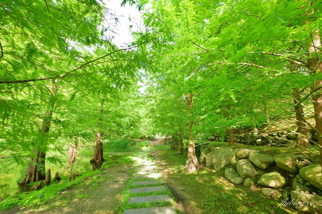 南庄雲水度假森林:浪漫落羽松渡假園區,綠意盎然的自然景觀 @飛天璇的口袋