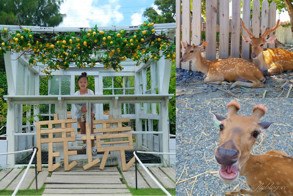 鹿境梅花鹿生態園區:墾丁親子旅遊景點,和梅花鹿的近距離接觸 @飛天璇的口袋