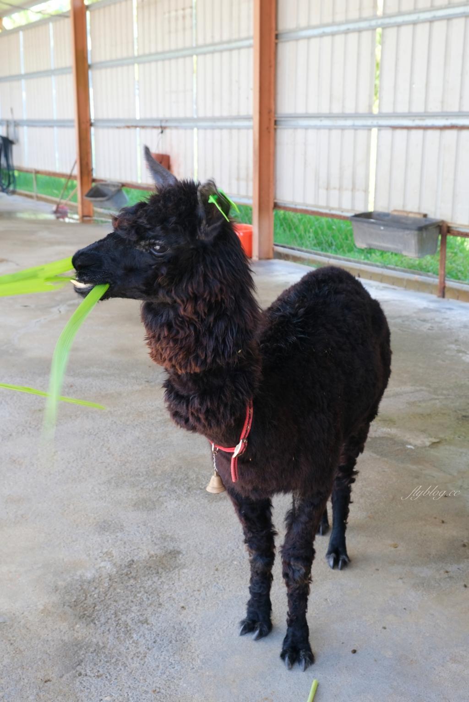 【屏東恆春】墾草趣親子園區:近距離餵食梅花鹿、草泥馬和小兔兔 @飛天璇的口袋