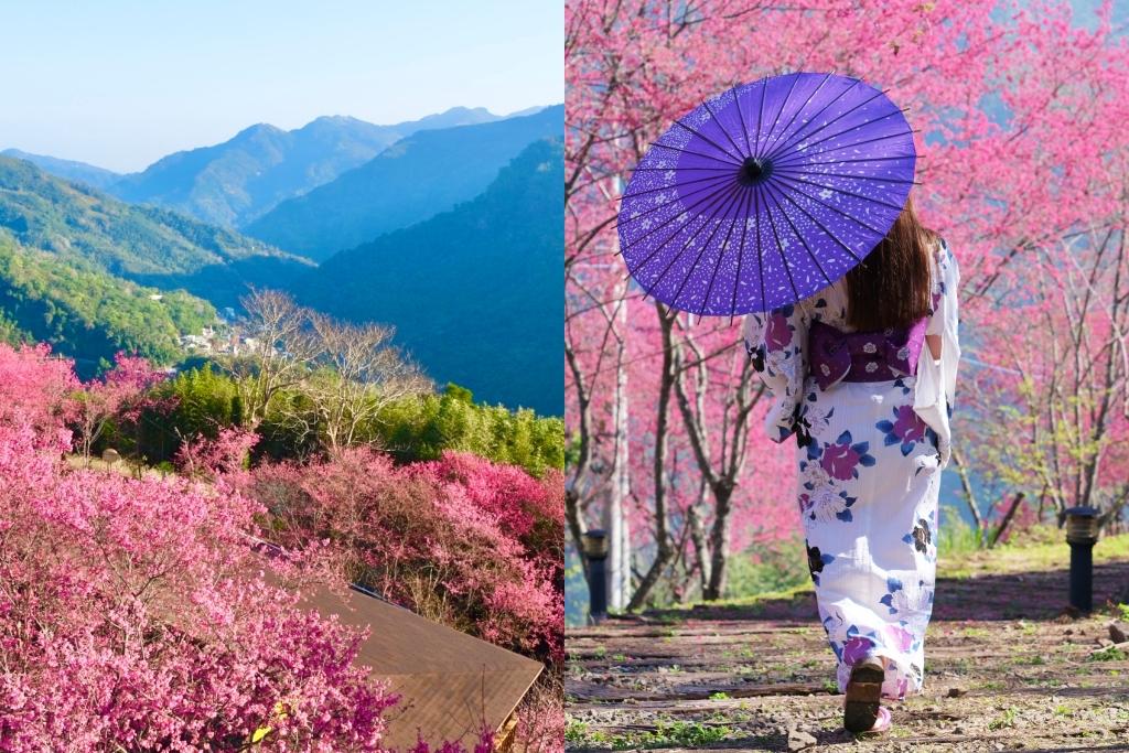 悅峰山莊:坐擁整片盛開山櫻花美景,新竹五峰豪華包棟民宿 @飛天璇的口袋