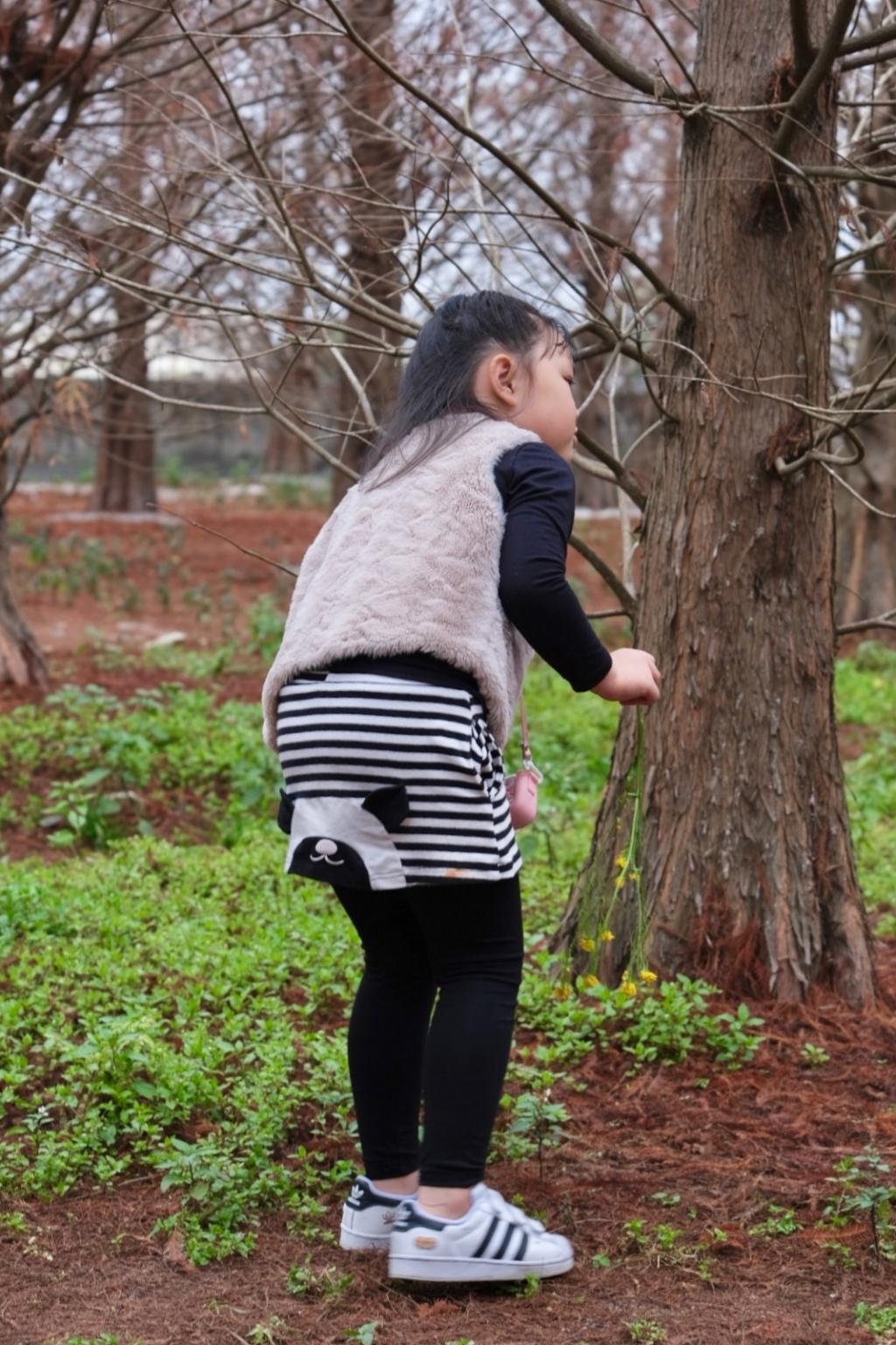 【台中外埔】外埔落羽松秘境:火炎山下200棵落羽松樹林,后里麗寶樂園附近的秘境 @飛天璇的口袋