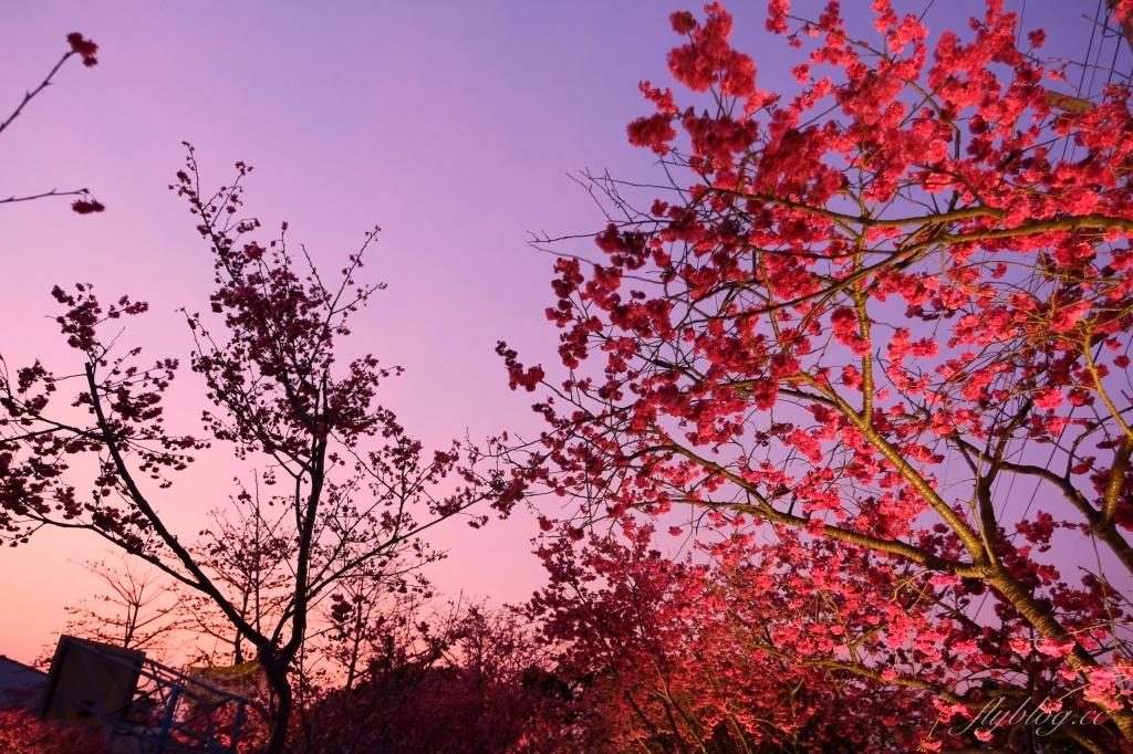 2021泰安派出所櫻花季:中部最佳賞夜櫻景點推薦,全台最美最浪漫的警察局 @飛天璇的口袋