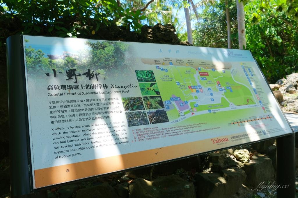 【台東景點】小野柳:充滿自然生態東部沿海地質教室,天氣好的時候還可以眺望綠島 @飛天璇的口袋