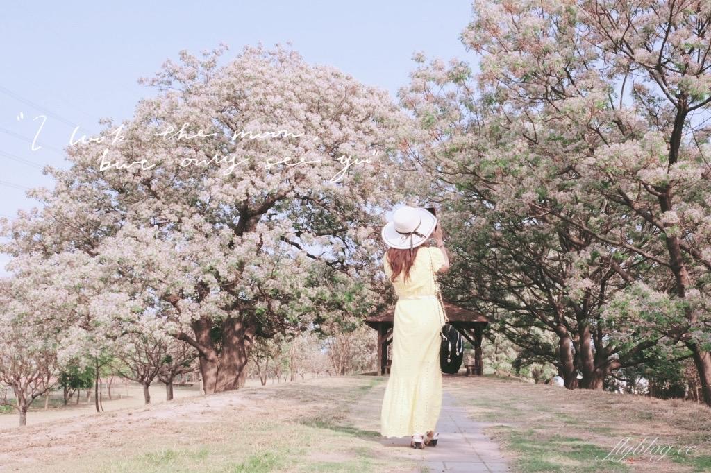 【彰化旅遊】 彰化大肚溪棒壘球場:夢幻紫色苦楝花盛開,悠閒浪漫的紫色隧道 @飛天璇的口袋