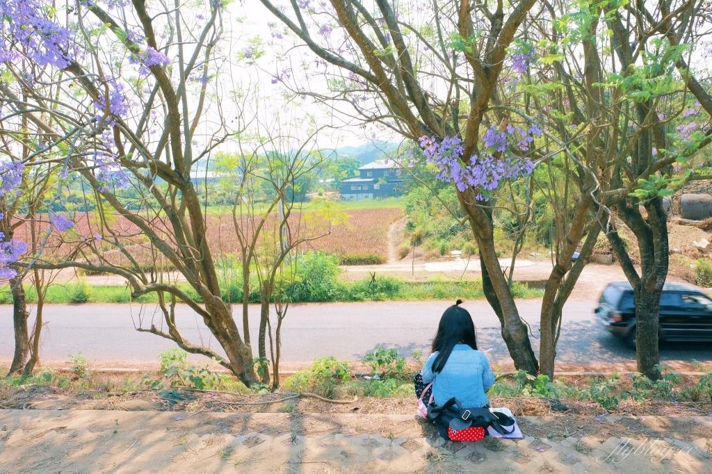 嘉義藍花楹隧道:盧厝堤防藍花楹漸開中,紫色浪漫綿延800公尺 @飛天璇的口袋
