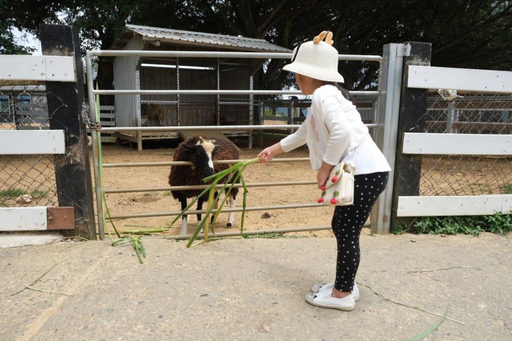 台東卑南|初鹿牧場 幅員遼闊的親子旅遊景點,滾草區、餵食區、動物區、森林浴區 @飛天璇的口袋