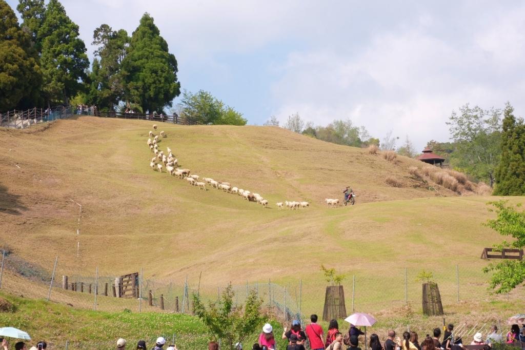 【南投清境】清境一日遊行程:座擁海拔2000公尺的絕佳美景,全台最具有紐西蘭風情的景點 @飛天璇的口袋