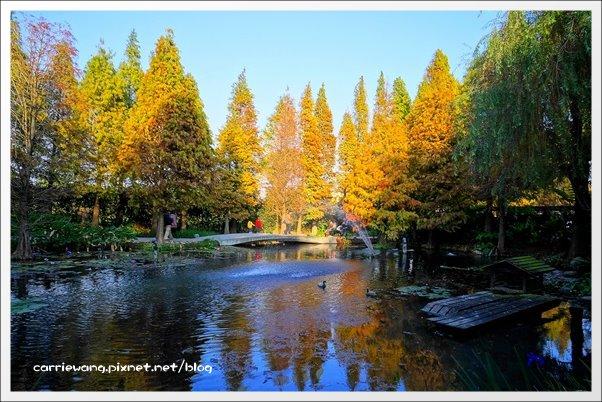 菁芳園休閒農場:最美的落羽松森林,彷佛到了歐洲一般~ @飛天璇的口袋