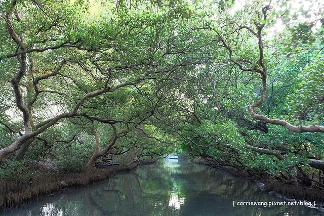 【台南旅遊景點】台江國家公園。搭竹筏遊四草隧道,台灣版迷你亞馬遜河,悠閒的生態之旅 @飛天璇的口袋