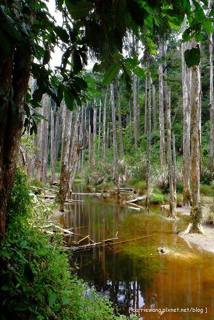 忘憂森林:虛無飄渺的美景有如人間仙境,5、6 月是最佳前往的時節,旅遊溪頭、杉林溪之際還有不同的景點可以選擇 @飛天璇的口袋