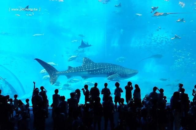 美麗海水族館┃沖繩旅遊景點:絢麗多彩的沖繩之謎,嘆為觀止的黑潮之海,非常療癒的海底動物,親子旅遊推薦景點 @飛天璇的口袋