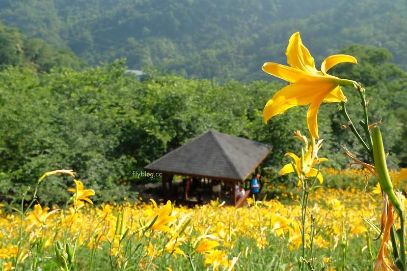 沐心泉休閒農場┃台中新社:中部最美的賞金針花景點,一年四季都有不同的花卉 @飛天璇的口袋