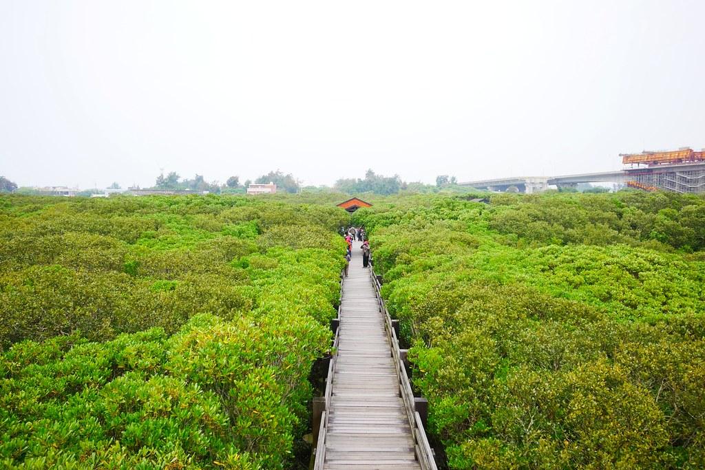 新豐紅樹林綠色步道┃新竹旅遊:兼具休閒與觀光的生態保護區,走在被大自然包圍的綠色小隧道 @飛天璇的口袋
