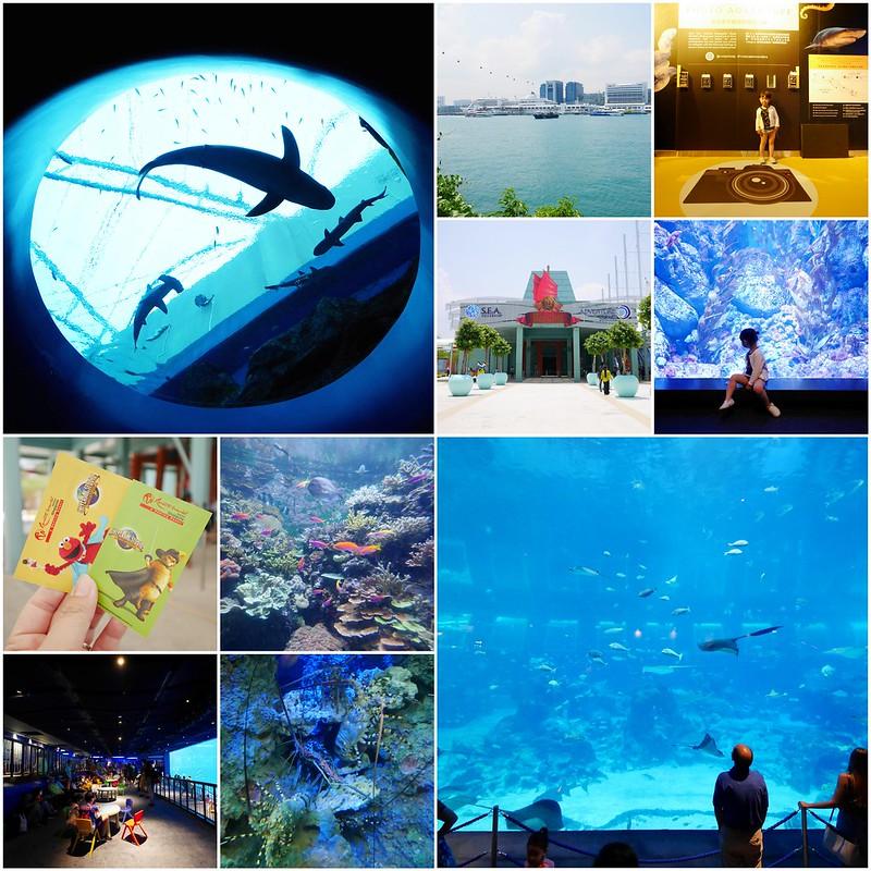 S.E.A海洋館┃新加坡旅遊:新加坡必玩的親子旅遊景點,全世界最大的水族館,超過800種海底生物超療癒 @飛天璇的口袋