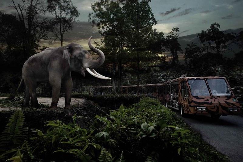 新加坡夜間動物園┃新加坡景點:全球唯一夜間導覽動物園,Night Safari夜間動物園的交通方式和遊園心得 @飛天璇的口袋