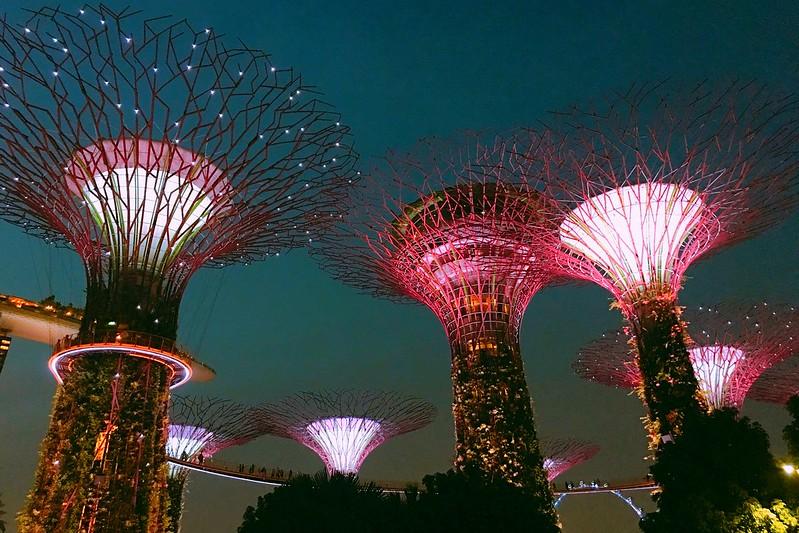 天空樹 Supertree Grove┃新加坡景點:濱海灣公園超震撼美景,走進阿凡達的星球,新加坡必遊景點推薦 @飛天璇的口袋