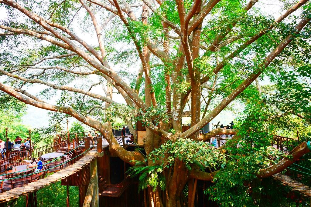 巨樹咖啡屋 The Giant Chiangmai Thailand┃泰國清邁:清邁近郊秘境咖啡館,懸空在50米高叢林雅座喝咖啡,巨樹咖啡屋還有提供住宿 @飛天璇的口袋