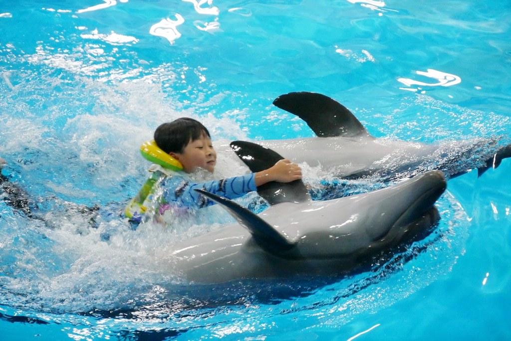 Pattaya Dolphinarium 芭達雅海豚之家:亞洲最棒的海豚表現,泰國芭達雅最新景點,與最可愛的水上動物親密親觸 @飛天璇的口袋