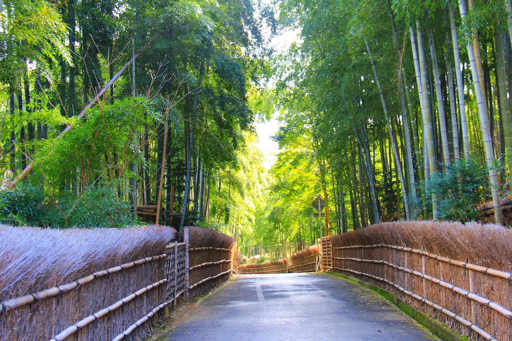 竹之徑(竹林公園):日本500條最美的步道,不用到嵐山人擠人,幽靜又療癒的京都旅遊景點 @飛天璇的口袋