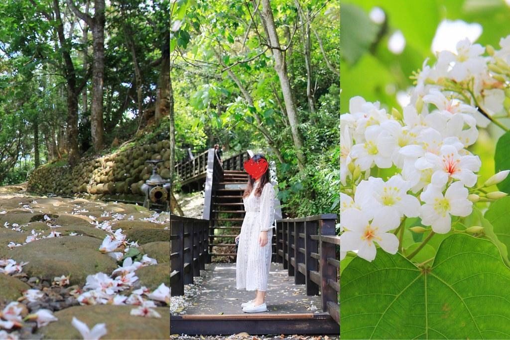 2020苗栗桐花季:銅鑼好客公園4.28最新花況,一起欣賞浪漫的5月雪 @飛天璇的口袋