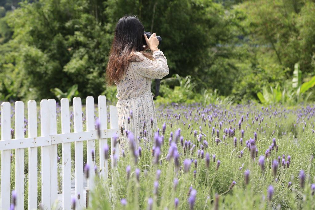 葛瑞絲香草田:全國最大的薰衣草田,苗栗最浪漫的紫色花海,每年3月~5月免費參觀 @飛天璇的口袋