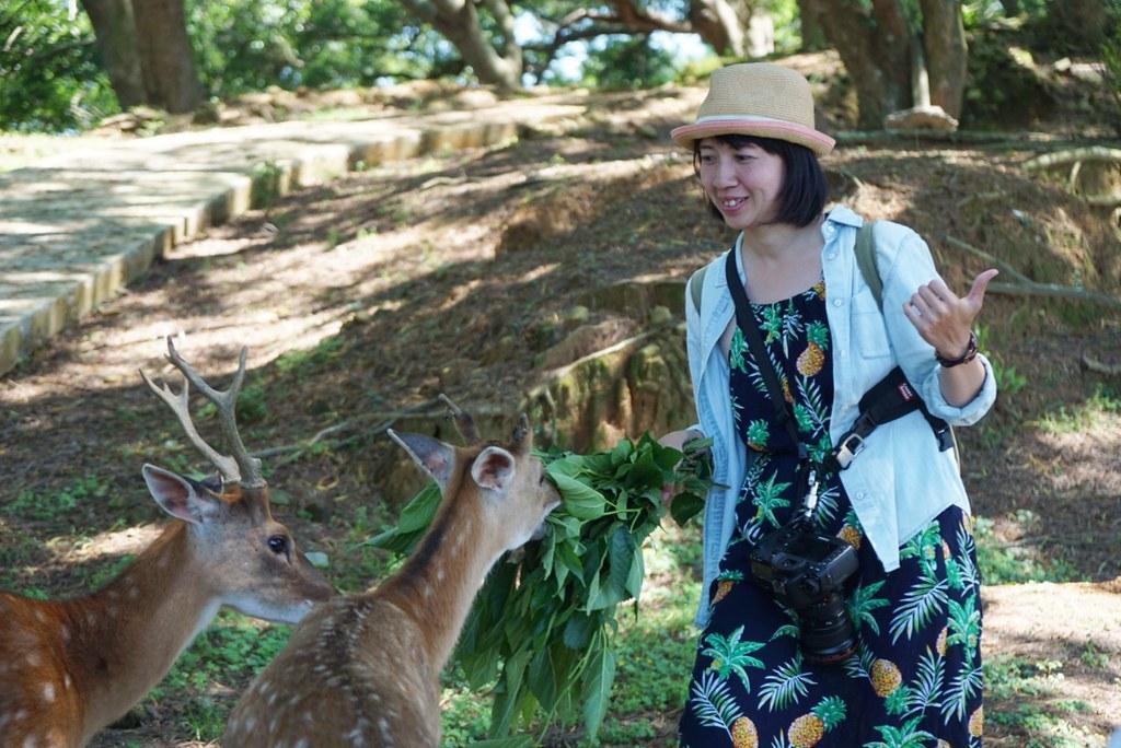 馬祖大坵島:遇見可愛的野生梅花鹿,綠色草原與碧海藍天,馬祖大坵交通及住宿 @飛天璇的口袋