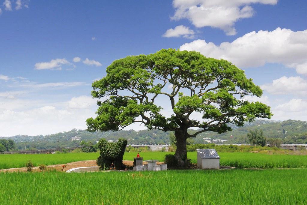 銅鑼龍貓土地公廟:可愛又療癒的IG打卡景點,200年歷史的田心伯公,享受大片綠意田園景觀 @飛天璇的口袋